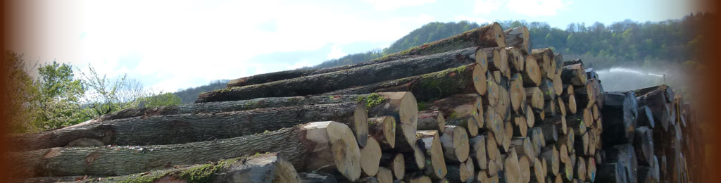 Oak logs in wet