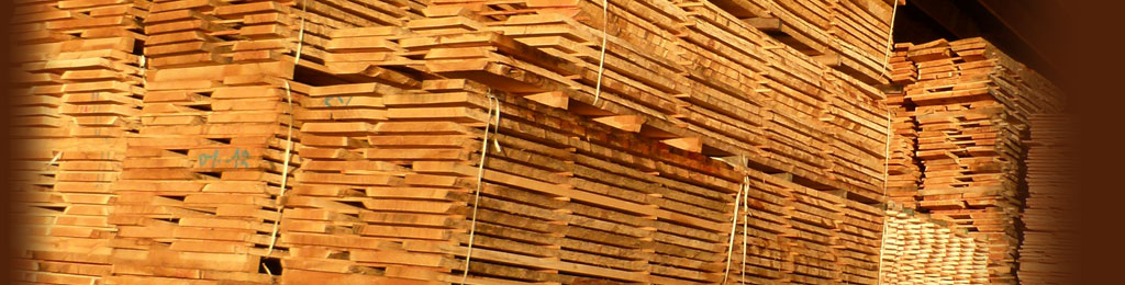 Dry oak planks at the sawmill